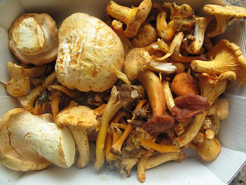 Sautéed Wild Mushrooms (My Recipe)